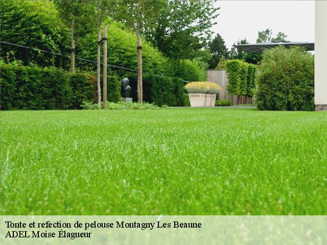 Tonte et refection de pelouse  montagny-les-beaune-21200