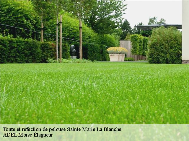 Tonte et refection de pelouse  sainte-marie-la-blanche-21200